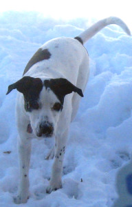 Many pets, like Loverboy here, love to play in the snow. However, there are neglected dogs and cats that are left outside for far too long in wintery conditions.